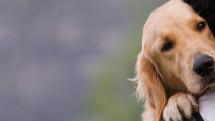 Adotar um pet: emoção x razão