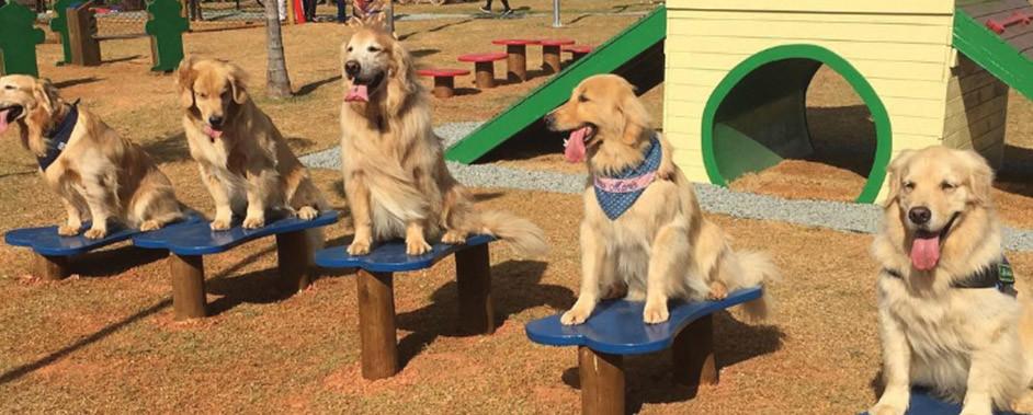 Mooca recebe o maior Pet Park fixo do Brasil
