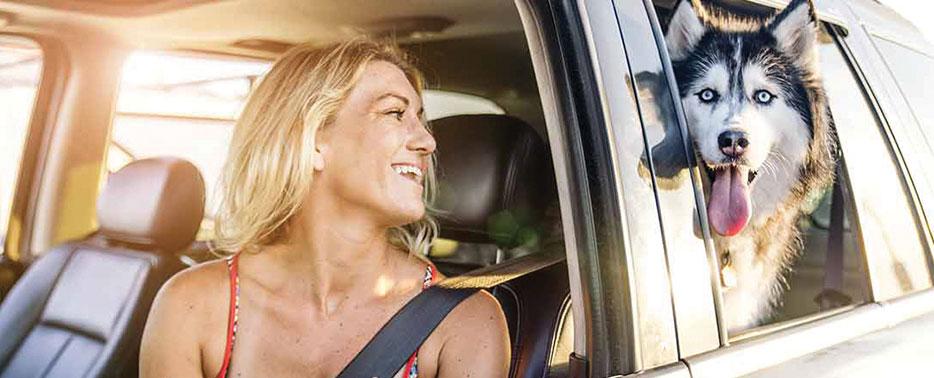 Cuidados na hora de transportar seu pet no carro